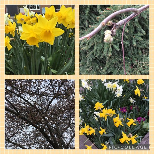 Signs of Spring in our playground.