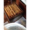 Extracting honey from full frames.