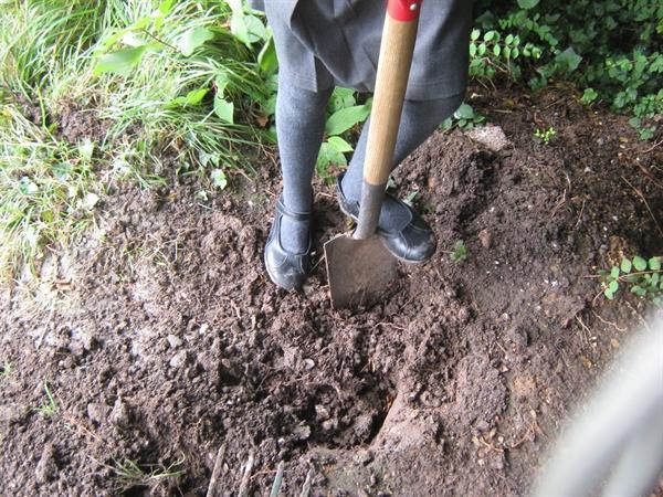 Earthworm survey (259KB)
