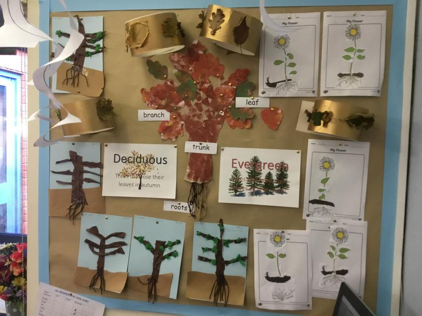 We are learning about Plants and Trees