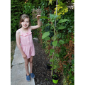 Bea's plant is growing rapidly!