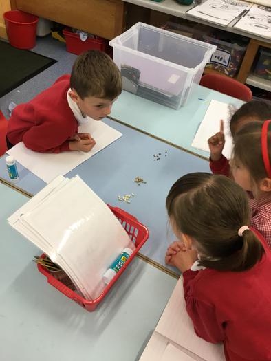 Identifying seeds