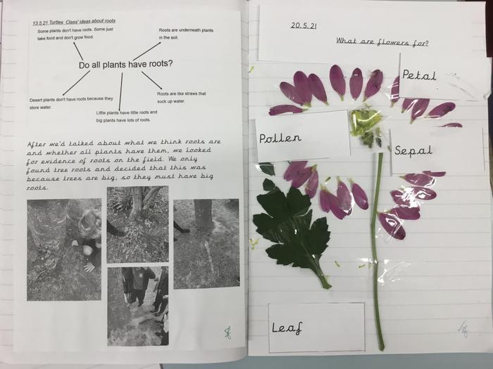 Flower dissection!