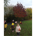 We went on a Nature Walk, looking for signs of Autumn. What can you spot?