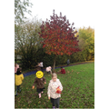 We went on an Autumn Walk to look for signs of the seasons changing!