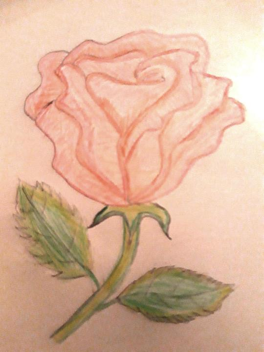 A stunning rose by Emily