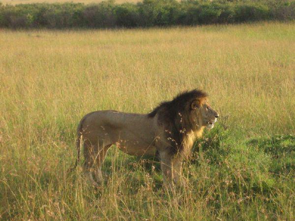 Kenyan wildlife!