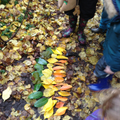 Looking at patterns, shapes and colours in the natural world