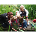 Observing plant and animal life in our pond