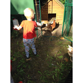 Saying 'Good Morning' to the chickens
