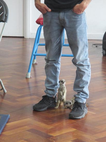Baby Meercats