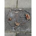 Isla - Chestnut Class