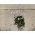 Dyhaan  - Chestnut Class