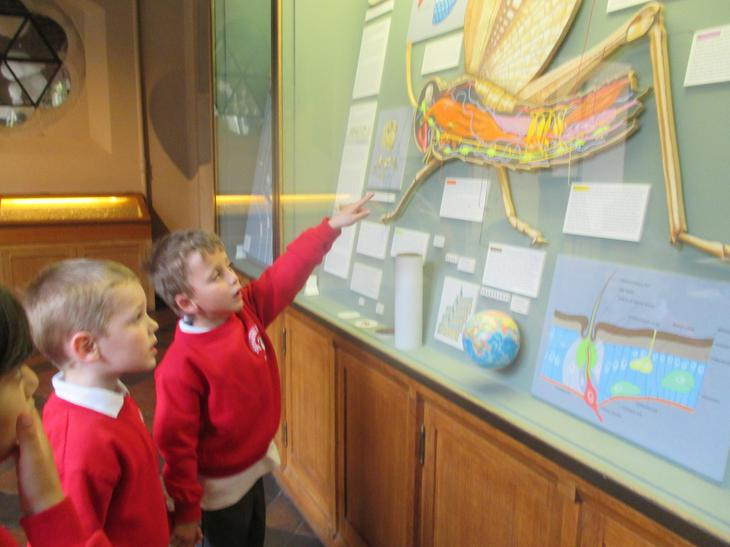 Learning about the parts of an insect.