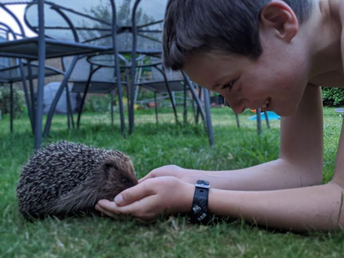 Harry feeding the hedgehog
