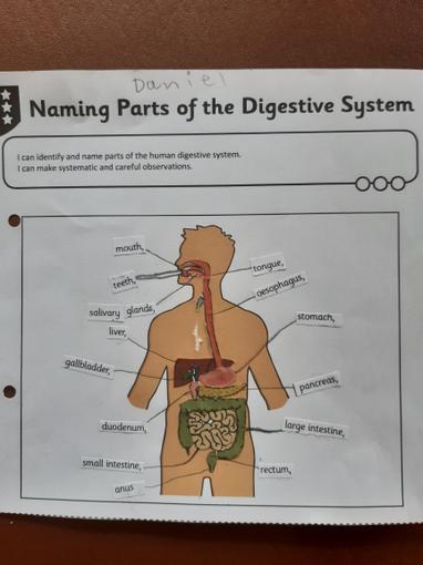 Daniel's Digestive system