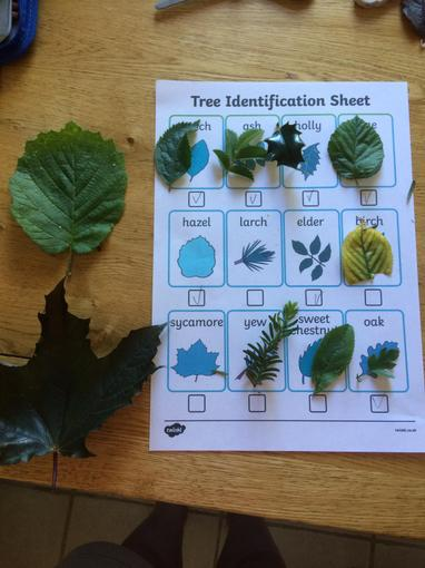 Devon's tree identification