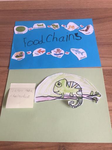 Bonnie's food chain work