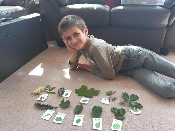 Daniel's Leaf collection