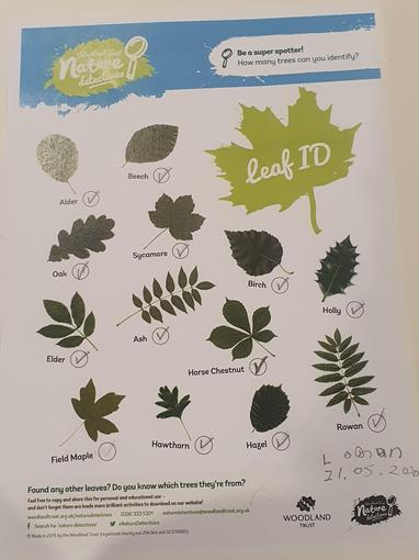 Logan's leaf identification