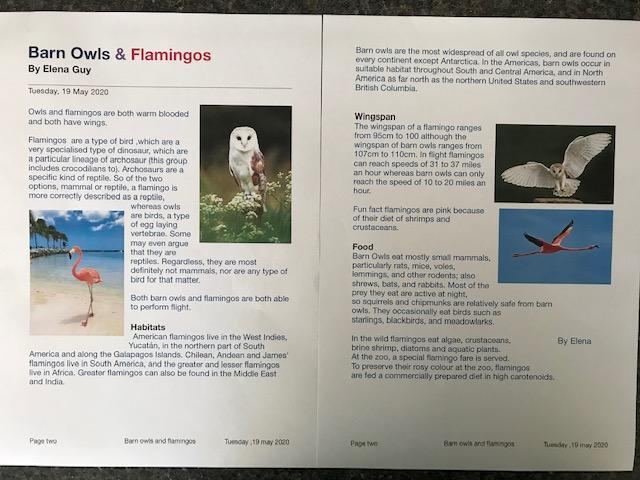 Elena's Information on barn owls and flamingos