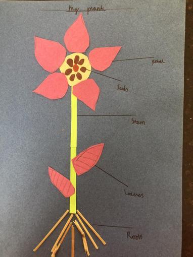 Fletcher's flower collage