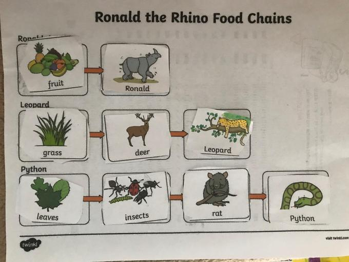 Isabelle's food chains work