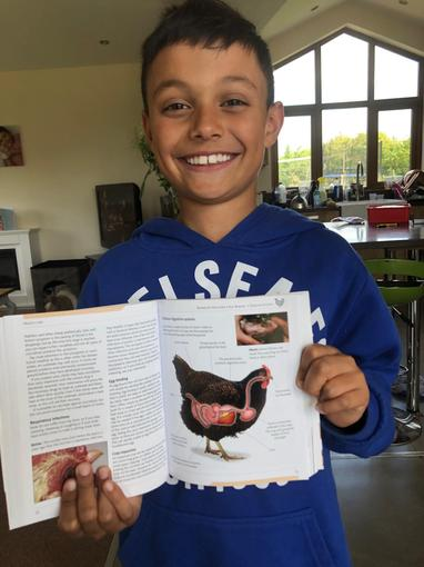 Cameron's research - Chicken's digestive system