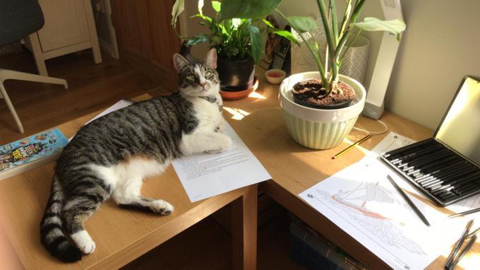 Alfie's cat Felix helping him out with decimals!