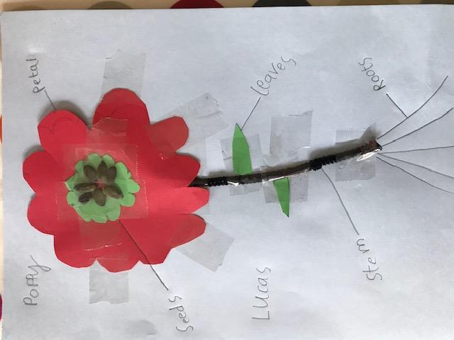 Lucas's flower collage