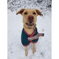 Miss Hare's dog - Rosie