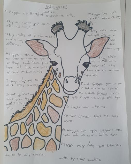Albey's Fact File about Giraffes