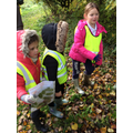 Leaf identifying and collecting!