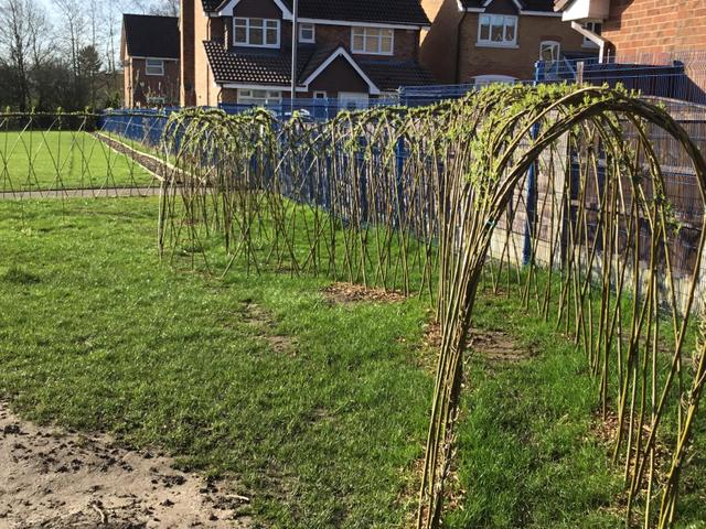 Willow plantations...