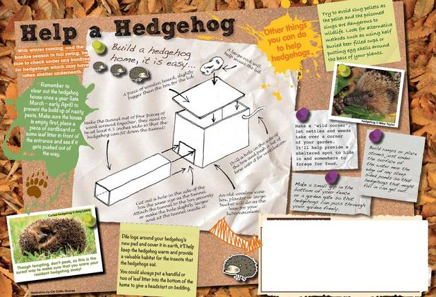 Create a Hedgehog home for your garden - or for school!