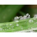 Ice seen under the microscope