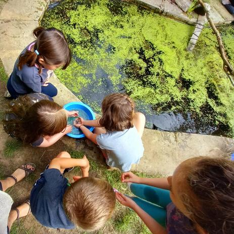 Looking for Newts of all ages and sizes
