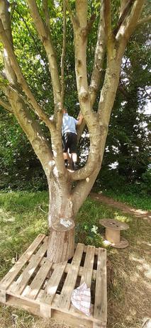 Tree Climbing Has Rules!