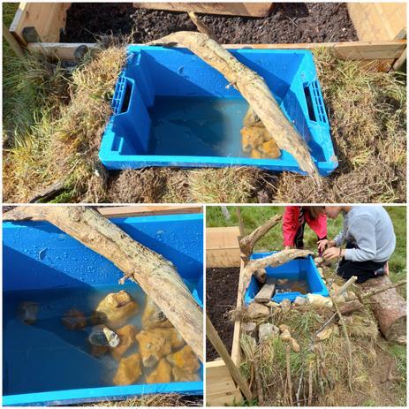 We made a tiny wildlife pond,