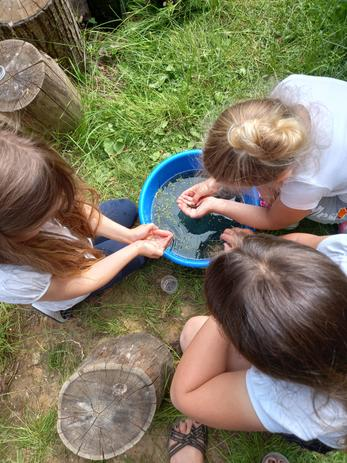 Looking for the newt tadpoles