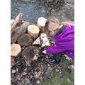 Helping rewild the pond