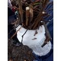 Making A Bug Nest