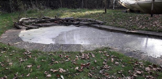 Our Pond used to have nothing but concrete edges