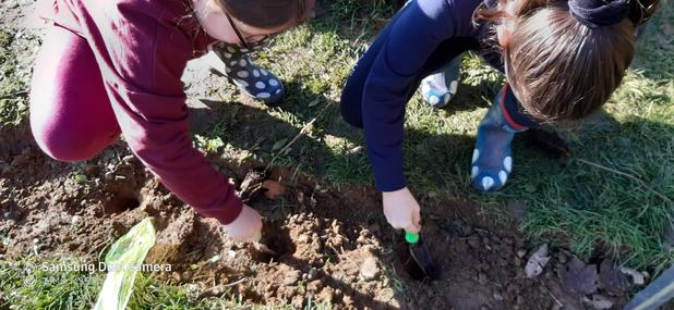 Planting Hawthorns