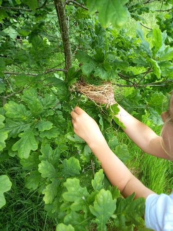 We like helping the birds and insects