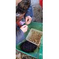 Threading Elder beads