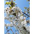 Sings of spring