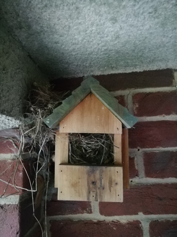 The wrens have flown from the nest!