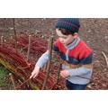 weaving a wattle fence