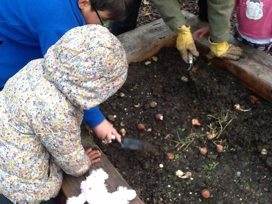 Year 6 helping Early Years to plant Narcissi.